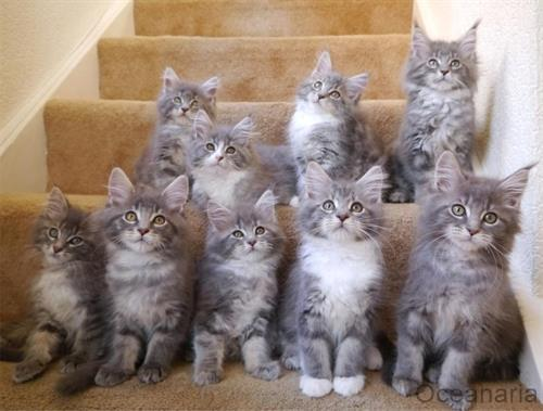 Cat Rescue Cleveland Uk